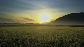 Flycam Moves above Rice Fields against Hill Silhouette Sunrise. Flycam moves above wide rice fields against distant hill silhouette and pictorial rising sun stock footage