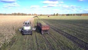 Flycam podąża syndykata dolewania kukurydzanego ulistnienie w przyczepę zbiory