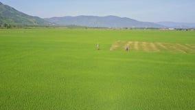 Flycam se mueve a la gente que camina entre campos del arroz contra las colinas almacen de metraje de vídeo