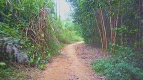Flycam se mueve a lo largo del sendero de tierra en bosque tropical verde