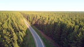 Flycam sigue la conducción de automóviles blanca entre bosque enorme del pino almacen de metraje de vídeo