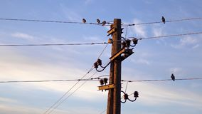 Flycatcher Muscicapa πουλιά striata στη θέση με τα ηλεκτρικά καλώδια Στοκ φωτογραφία με δικαίωμα ελεύθερης χρήσης