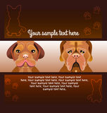 Flyer brochure designs of two dogs Royalty Free Stock Photography
