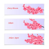 Flyer, invitation bills or leaflets. With a depiction of flowering realistic branches with a pink cherry. Sakura Stock Photography