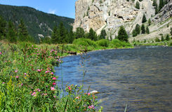 Flyfishing au Montana Photos stock