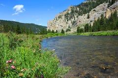 Flyfishing Gallatin-Fluss Stockbild