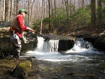 Flyfishing pour la truite de ruisseau Photographie stock