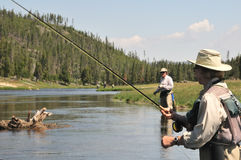 Flyfishing senior couple. Active senior couple wading in the Firehole River (Yellowstone National Park) and flyfishing for trout Royalty Free Stock Photography