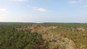 Flyg över en pinjeskog lager videofilmer
