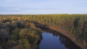 Flyg över floden och skog arkivfilmer