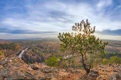 Flyg över höstskog Fotografering för Bildbyråer