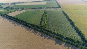 Flyg över jordbruks- fält stock video