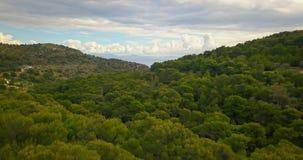Flyg över pinjeskog av den Aegina ön, Grekland med dramatisk himmel stock video