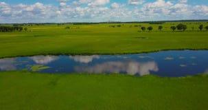 Flyg över quadcopteren över en grön äng stock video