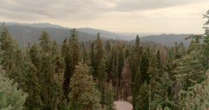 Flyg över sequoianationalparken 4K November 2017 arkivfilmer