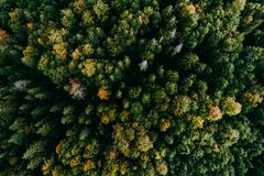 Flyg- flyg över skogen royaltyfri fotografi