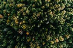 Flyg- flyg över skogen royaltyfria bilder