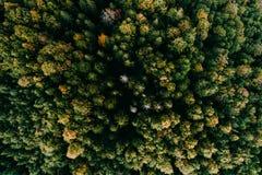 Flyg- flyg över skogen royaltyfri bild