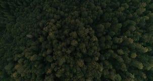 Flyg- flyg över skogen arkivfilmer