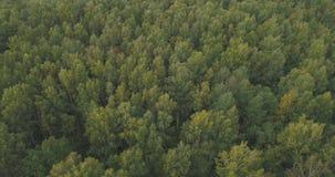 Flyg- flyg över sommarskog på en molnig dag Royaltyfri Bild