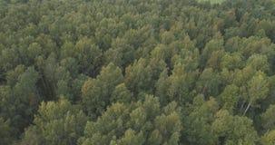 Flyg- flyg över sommarskog på en molnig dag Arkivfoton