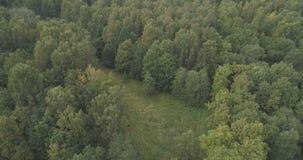 Flyg- flyg över sommarskog på en molnig dag Arkivfoto