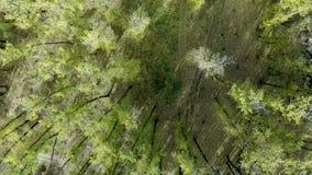 Flyg över träden arkivfilmer