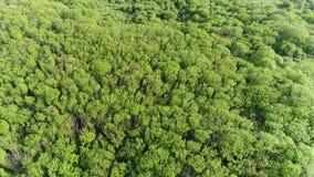 Flyg över träden från det splittrade berget stock video