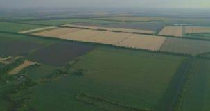 Flyg över vete, nödgräs, majs, korn, havre, rhy fält stock video