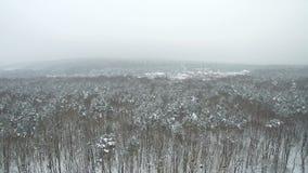 Flyg- flyg över vinter snö-täckt skog i dimman stock video