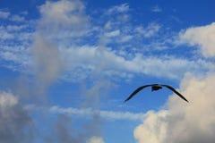 Flyg av en seagull på havet royaltyfria bilder