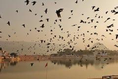 Flyg av fåglar Royaltyfri Fotografi