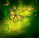 Flyg av fjärilar är i strålarna Arkivbild