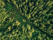 Flyg- bästa sikt av den sommargräsplanträd och vägen i skog i lantliga Finland Arkivbilder