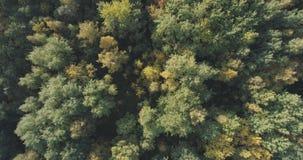 Flyg- bästa sikt av höstträd i skog i september Royaltyfri Fotografi