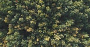 Flyg- bästa sikt av höstträd i skog i september Arkivfoto