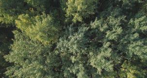 Flyg- bästa sikt av höstträd i skog i september Royaltyfria Bilder