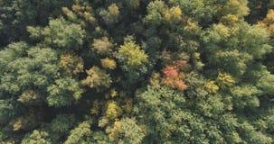 Flyg- bästa sikt av höstträd i skog i september Royaltyfri Foto