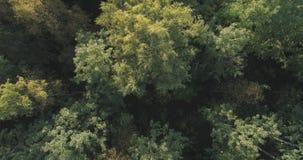 Flyg- bästa sikt av höstträd i skog i september Arkivbild