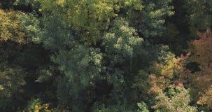 Flyg- bästa sikt av höstträd i skog i september Arkivbilder