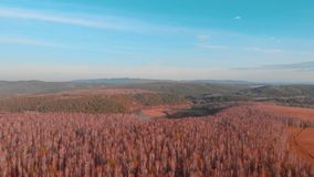 Flyg- bästa sikt av landsvägen till och med fält och skogar i sommar gem Bästa sikt av skogområdet med vägen lager videofilmer