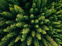 Flyg- bästa sikt av sommargräsplanträd i skog i lantliga Finland Arkivbild