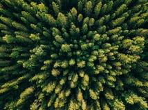 Flyg- bästa sikt av sommargräsplanträd i skog i lantliga Finland Arkivbilder