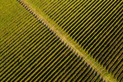 Flyg- bästa sikt av vingården arkivfoton