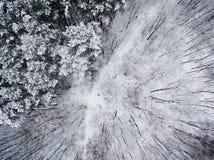 Flyg- bästa sikt av vinterskogen Fotografering för Bildbyråer