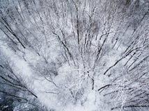 Flyg- bästa sikt av vinterskogen Royaltyfri Fotografi