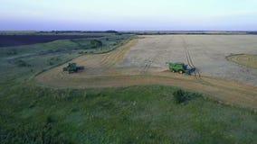Flyg- bästa sikt: Vete för skördearbetarefullföljandeplockning på vetefält på solnedgången Flyga direkt ovanför skördetröskan in arkivfilmer