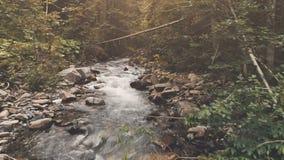 Flyg- flyg: bergflod i höstskog stock video