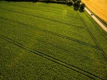 Flyg- bild av en sparad frodig gräsplan Arkivfoto