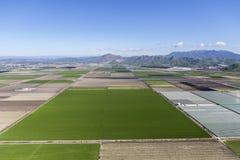 Flyg- Camarillo Kalifornien lantgårdfält Arkivfoton